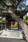 Hasedera Gate - Hase-dera Temple in Kamakura is officially named Kaiko-zan Jisho-in Hasedera but commonly called Hase Kannon.  Hase-Dera has landscape ALMMF7MC5| 写真素材・ストックフォト・画像・イラスト素材|アマナイメージズ