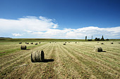 Scenic landscape with hay bales rolled up ALMBTEFAT| 写真素材・ストックフォト・画像・イラスト素材|アマナイメージズ