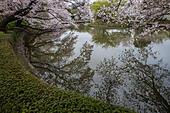The pond at Tsurugaoka Hachimangu Shrine is the one of the most famous spots in Kamakura for sakura viewing. The Five Peony Garden at Tsurugaoka Hachi ALMJ034B7| 写真素材・ストックフォト・画像・イラスト素材|アマナイメージズ