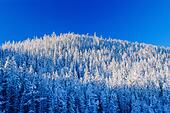 Winter landscape with forest on mountain under clear sky, Bow Summit, Banff National Park, Alberta, Canada ALM2AKB8P2| 写真素材・ストックフォト・画像・イラスト素材|アマナイメージズ