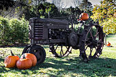 Halloween old Tractor with Pumpkins in the fall ALMKEX76H| 写真素材・ストックフォト・画像・イラスト素材|アマナイメージズ