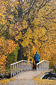 Man walking with a baby carriage, fall season, Stockholm, Sweden, Europe ALMBW13RD| 写真素材・ストックフォト・画像・イラスト素材|アマナイメージズ