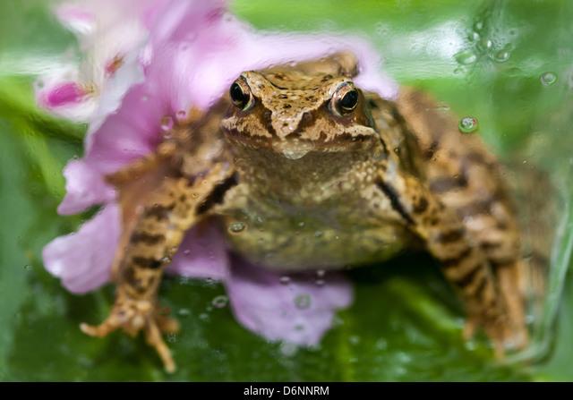 Berlin, Germany, Close up of a toad ALMD6NNRM| 写真素材・ストックフォト・画像・イラスト素材|アマナイメージズ