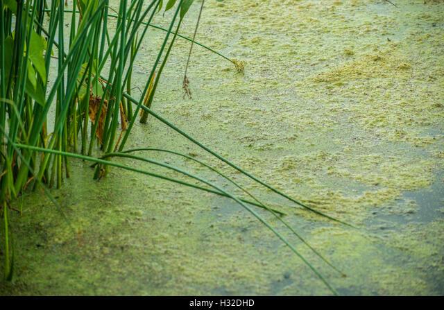 Close up of Algae and weeds ALMH32DHD| 写真素材・ストックフォト・画像・イラスト素材|アマナイメージズ