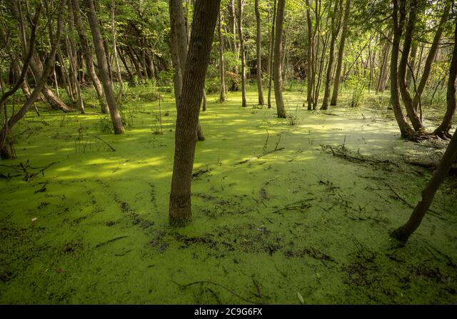 Over-flowing lake water has entered forest land, inundating trees and brush indescriminately. ALM2C9G6FX| 写真素材・ストックフォト・画像・イラスト素材|アマナイメージズ