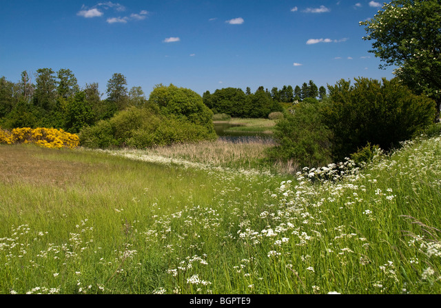 Danish springtime landscape with blooming wild flowers ALMBGPTE9| 写真素材・ストックフォト・画像・イラスト素材|アマナイメージズ