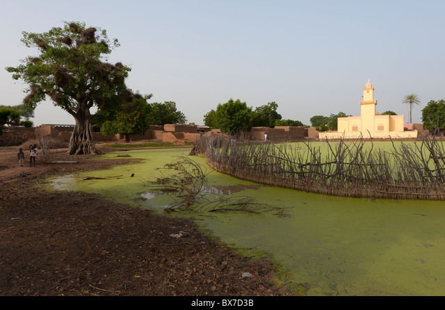 Yellow coloured, modern shaped, mosque in front of a duckweed covered pond in a rural village in Mali, West Africa. ALMBX7D3B| 写真素材・ストックフォト・画像・イラスト素材|アマナイメージズ