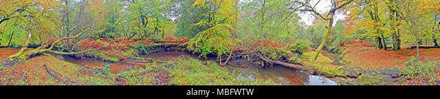 360º VR Cylindrical Panorama, New Forest Stream ALMMBFWTW  写真素材・ストックフォト・画像・イラスト素材 アマナイメージズ