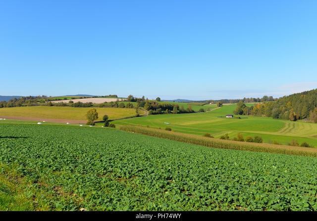 Autumn landscape sun atmosphere ALMPH74WY  写真素材・ストックフォト・画像・イラスト素材 アマナイメージズ