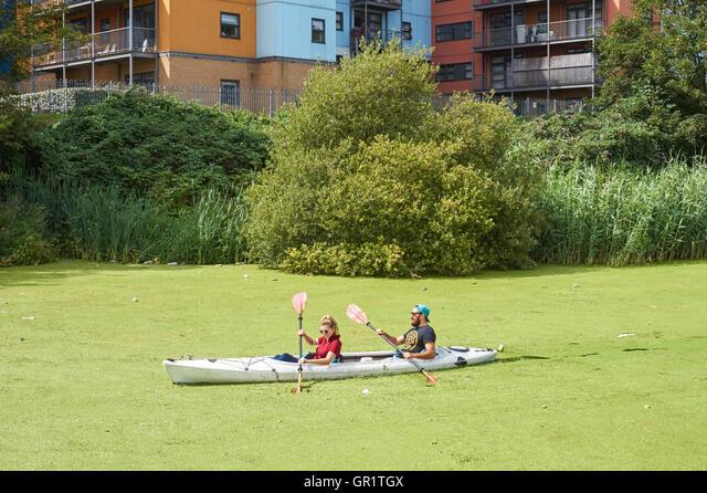 People kayaking through common duckweed on the River Lea near Bow, London England United Kingdom UK ALMGR1TGX| 写真素材・ストックフォト・画像・イラスト素材|アマナイメージズ
