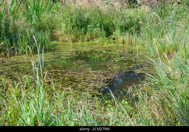 Small city pond with green duckweed ALM2CND7NN| 写真素材・ストックフォト・画像・イラスト素材|アマナイメージズ