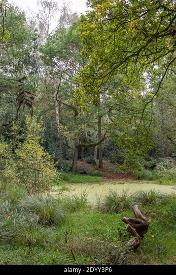 Thompson Common Nature Reserve, Norfolk, England ALM2DYY3P6| 写真素材・ストックフォト・画像・イラスト素材|アマナイメージズ