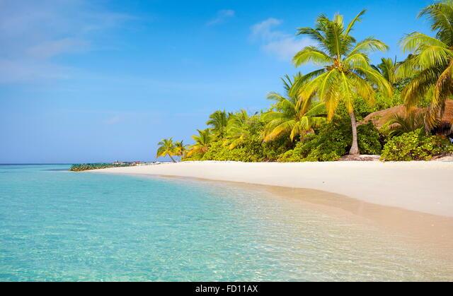 Maldives Beach landscape ALMFD11AX| 写真素材・ストックフォト・画像・イラスト素材|アマナイメージズ