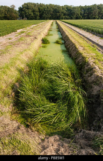 Sloot met kroos in Warkumerwaard; Ditch covered by duckweed at Warkumerwaard ALMP885M1| 写真素材・ストックフォト・画像・イラスト素材|アマナイメージズ