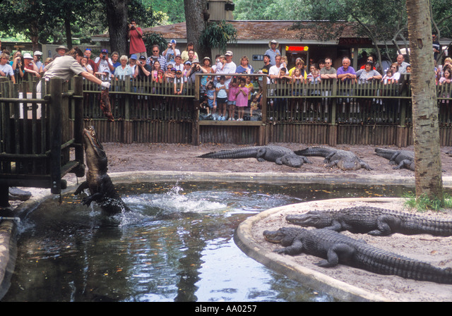 Florida St Augustine Alligator Farm Zoologial Park guide feeding a skinned nutria to alligator ALMAA0257| 写真素材・ストックフォト・画像・イラスト素材|アマナイメージズ