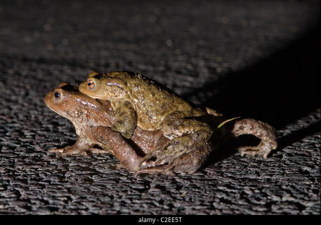 Toad West Sussex England ALMC2EE5T| 写真素材・ストックフォト・画像・イラスト素材|アマナイメージズ