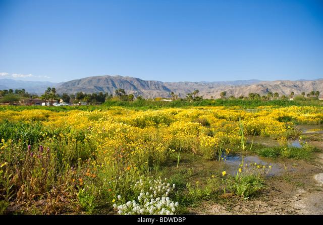 Desert wildflower field ALMBDWDBP| 写真素材・ストックフォト・画像・イラスト素材|アマナイメージズ