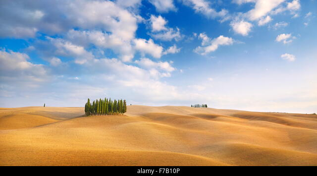 Cypress trees landscape, Val d'Orcia, Tuscany, Italy ALMF7B10P  写真素材・ストックフォト・画像・イラスト素材 アマナイメージズ