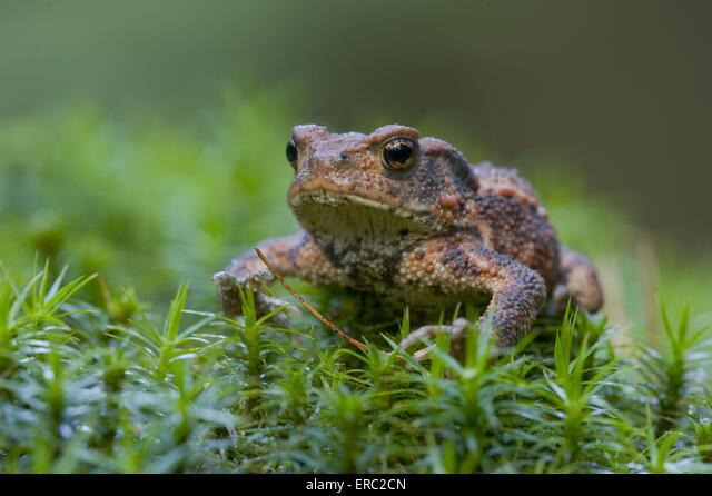 toad ALMERC2CN| 写真素材・ストックフォト・画像・イラスト素材|アマナイメージズ