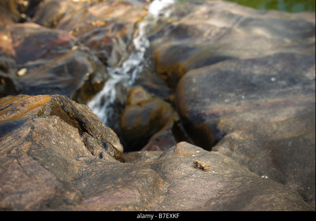 Juvenile or baby toad sits on a rock above Gunlom waterfall in Kakadu National Park ALMB7EXKF| 写真素材・ストックフォト・画像・イラスト素材|アマナイメージズ