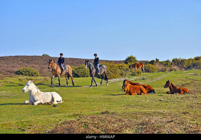 Horse riders and ponies in the New Forest National Park, Burley, Hampshire, England ALMHM66AP  写真素材・ストックフォト・画像・イラスト素材 アマナイメージズ