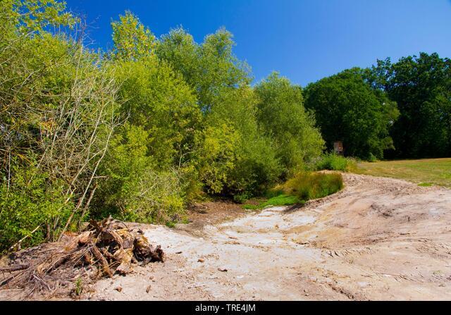 common spadefoot, garlic toad (Pelobates fuscus), habitat of garlic toads, Germany, Hesse ALMTRE4JM| 写真素材・ストックフォト・画像・イラスト素材|アマナイメージズ