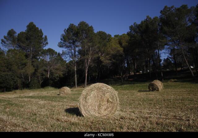 Bellaterra, Spain. Pictures taken in spring. ALMKCMAW6| 写真素材・ストックフォト・画像・イラスト素材|アマナイメージズ