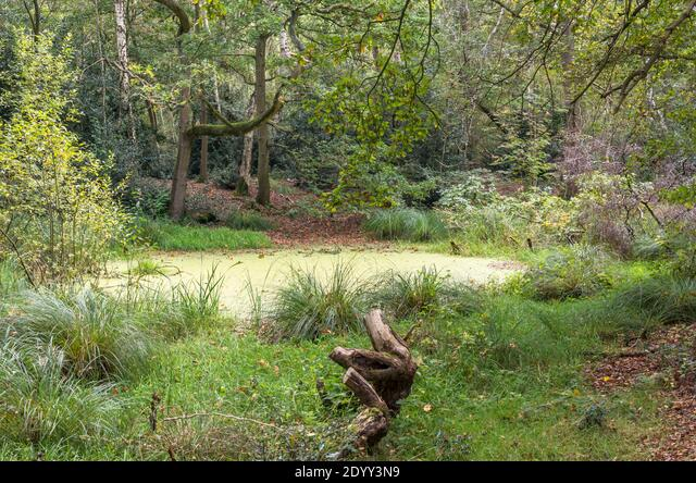 Thompson Common Nature Reserve, Norfolk, England ALM2DYY3N9| 写真素材・ストックフォト・画像・イラスト素材|アマナイメージズ