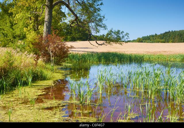 Masurian landscape, small lake near Gizycko, Poland, Europe ALMC6F4G7| 写真素材・ストックフォト・画像・イラスト素材|アマナイメージズ