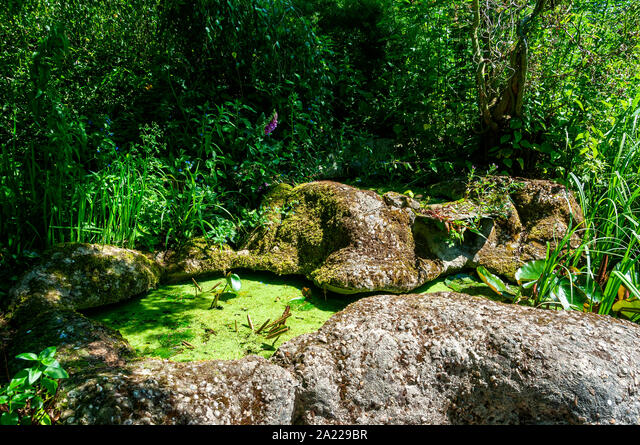 Abundant green-yellow duckweed floats on the surface of a small static pool enclosed by rocky banks surrounded by verdant green natural vegetation ALM2A229BR| 写真素材・ストックフォト・画像・イラスト素材|アマナイメージズ