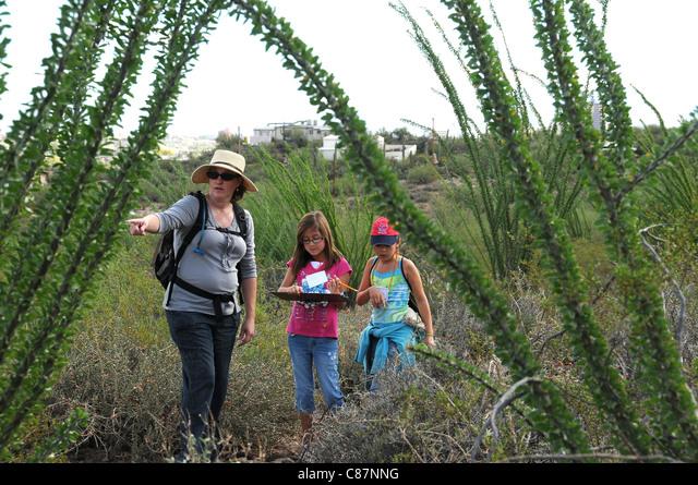 Elementary school students study the Sonoran Desert in Tucson, Arizona, USA. ALMC87NNG  写真素材・ストックフォト・画像・イラスト素材 アマナイメージズ