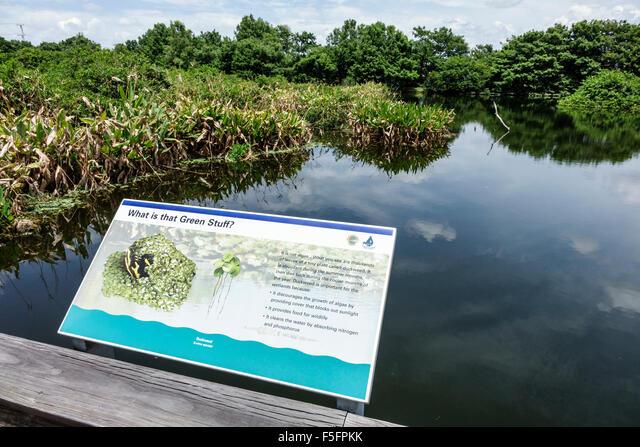 Florida, FL, South, Delray Beach, Wakodahatchee Wetlands, nature preserve, freshwater marsh, sign, information, water, duckweed, sightseeing visitors ALMF5FPKK| 写真素材・ストックフォト・画像・イラスト素材|アマナイメージズ