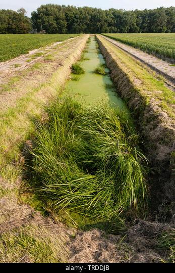 Ditch covered by duckweed at Warkumerwaard, Netherlands, Frisia, Warkumerwaard ALMTRDDJB| 写真素材・ストックフォト・画像・イラスト素材|アマナイメージズ
