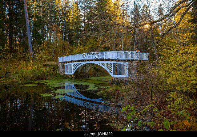 White wooden bridge over small river. Trees with autumn leaves above the water covered by duckweed. Quiet park, sunny fall time. ALMJWNM29| 写真素材・ストックフォト・画像・イラスト素材|アマナイメージズ