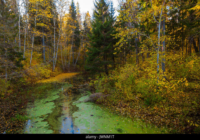 Trees with autumn leaves above the water covered by duckweed. Quiet park, sunny fall time. ALMJWNM1T| 写真素材・ストックフォト・画像・イラスト素材|アマナイメージズ